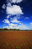 Dry summer with blue sky and white clouds. Dryness lake in the hot summer. CanoNegro, Costa Rica. Mud lake with little green flowe Stock Image