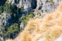 Dry summer Grass. Some dried out from the heat summer grass on the edge of a mountain cliff royalty free stock photos
