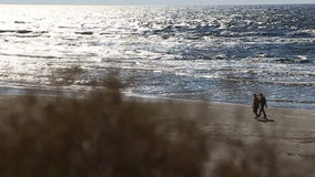 Dry summer grass swaying in the wind against the sea horizon stock video footage