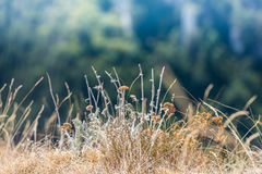 Dry summer Grass and weeds. Some dried out from the heat summer grass and thorny weeds in a blissful and peaceful meadow field with warm sun rays that illuminate Royalty Free Stock Photography