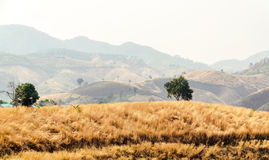 Dry summer pastures mountains Stock Images