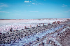 Dry in summer pink salty lake with path, hedged by weathered old wooden sticks Stock Image
