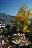 Dry in the sun. A beautiful  Chinese village, autumn, people dry their food Royalty Free Stock Photography