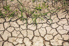 Dry surface. A dry earth in the field's irritation system Royalty Free Stock Images