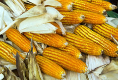 Dry sweet corn Royalty Free Stock Photography