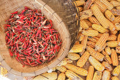Dry sweet yellow corn Royalty Free Stock Images