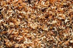 Dry Tamarind flowers Stock Photo