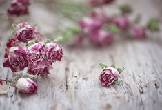 Dry Tea Roses On The Old Wood Background Stock Photos