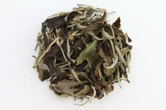 Dry Tea Stock Photo