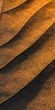 Dry teak leaf texture Stock Photos