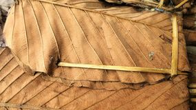Dry Teak leaves for thatching in northetn Thailand Royalty Free Stock Image