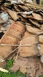 Dry Teak leaves for thatching in northetn Thailand stock images