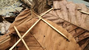Dry Teak leaves for thatching in northetn Thailand Stock Photos