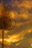 Dry teasel on stormy yellow clouds Royalty Free Stock Images