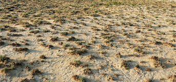 Dry terrain with scrubby vegetation Royalty Free Stock Photo