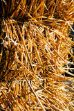 Dry thatch Stock Images