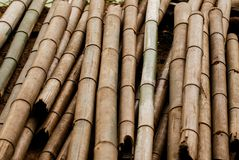 Dry thick bamboo pole. Were cut royalty free stock photo