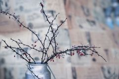 Dry thorny branches with berries in a metal jug, still life, in the style of ikebana on blurred background in blue tones royalty free stock image