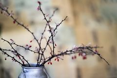 Dry thorny branches with berries in a metal jug, still life, in the style of ikebana on a light background. royalty free stock photo