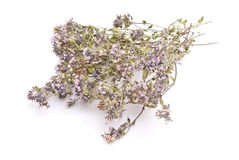 Dry thyme Royalty Free Stock Photo