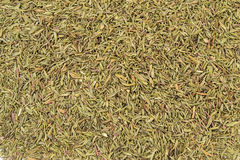 Dry thyme spice for food close up background.  royalty free stock images