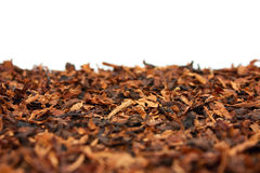 Dry tobacco royalty free stock images