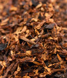 Dry tobacco close-up Stock Photo