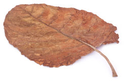 Dry tobacco leaf Stock Photos