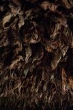 Dry tobacco leaves background Royalty Free Stock Images
