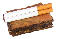Dry tobacco leaves with filter cigarette Stock Photos