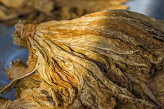 Dry tobacco leaves. Dry tobacco for make ciga Royalty Free Stock Images