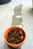 Dry ton pot just recieved water. Dry ton pot recieved water whit concrete floor background Royalty Free Stock Photography