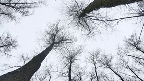 Dry tops of trees in the winter forest, landscape on nature the background of gray sky stock video footage