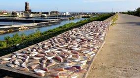 Dry torkad fisk i solen på havsdiket royaltyfria foton