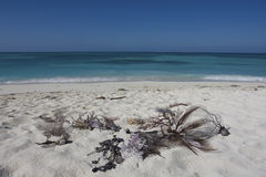 Dry Tortugas Royalty Free Stock Photo