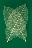 Dry transparent leaf Stock Photography