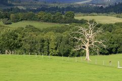 Dry tree. Autumn landscape with dry tree Royalty Free Stock Photos