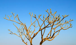 Dry tree Stock Photo