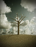Dry tree Royalty Free Stock Images