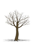 Dry tree Royalty Free Stock Photos