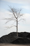 Dry tree. On the colliery royalty free stock photography