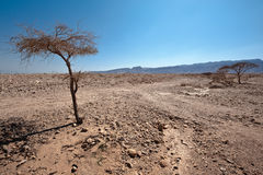 Dry Tree Stock Images