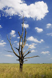 Dry tree. Against the sky with clouds Stock Photography