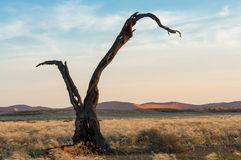 Dry tree Royalty Free Stock Photo