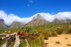 Dry tree. And amazing mountains in snow white cloud as a background. Shot in Hottentots Holland Mountains, Vergelegen area, near Somerset West, Western Cape Stock Photography