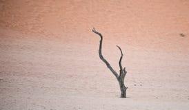 Sossusvlei, Namibia. Dry tree against red dunes in Deadvlei, Sossusvlei. Namib-Naukluft National Park, Namibia, Africa Royalty Free Stock Image