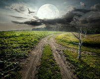 Dry Tree And Moon Stock Images
