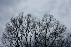 Dry tree in autumn weather Royalty Free Stock Photography