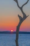 Dry tree Stock Photo