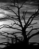 Dry tree backlit at dawn Royalty Free Stock Photos